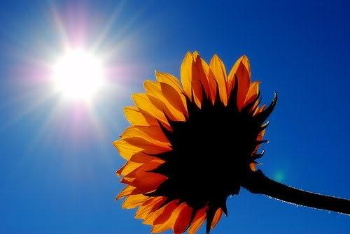 2306-sunshine