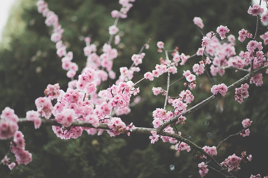 spring magic ritual