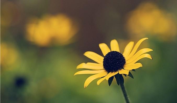 ©vinothchandar_Flickr